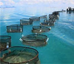 Fish Farms Development in Uganda