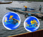 Solutions to Lower the Water Quality Pollution from Fish Feed
