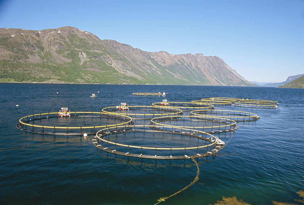 How to start a commercial fish farm fish farm business for How to start fish farming