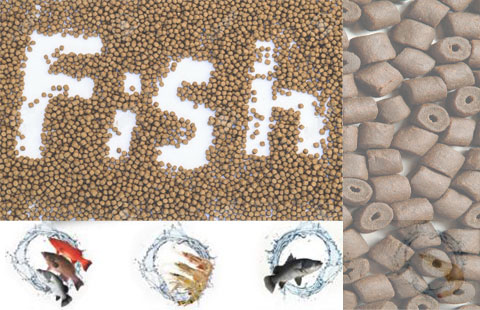 fish feed quality