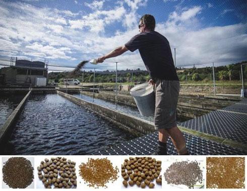 fish feed pellet
