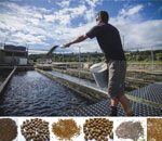 The Ways for Fish Farmers to Promote Fish Feed Utilization Ratio
