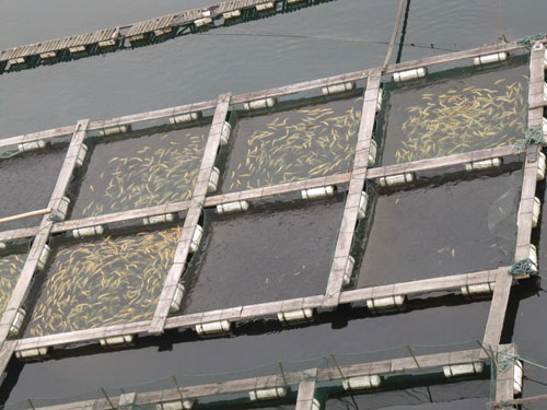 fish farm in Nigeria