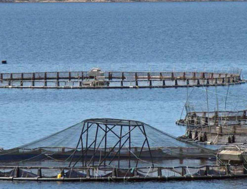 Commercial Aquaculture Production in Japan