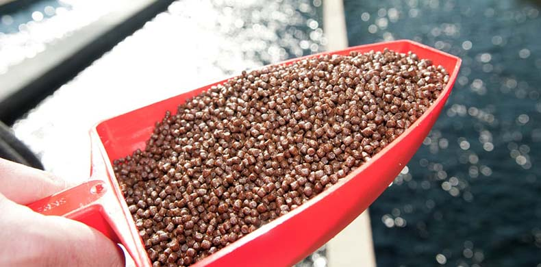 Advantages of Floating Fish Feed