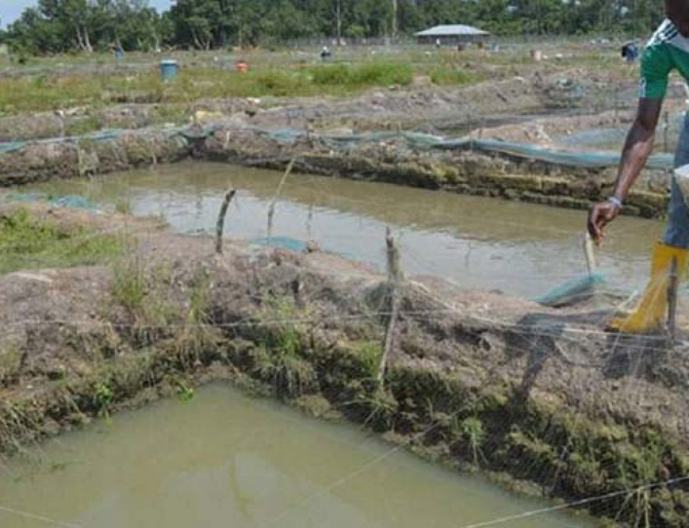 Nigeria Aquaculture Industry-A Long Way to Go