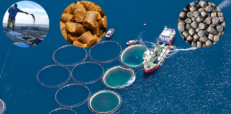 application of fish feed pellets