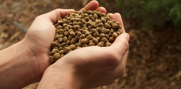 fish feed pellet quality